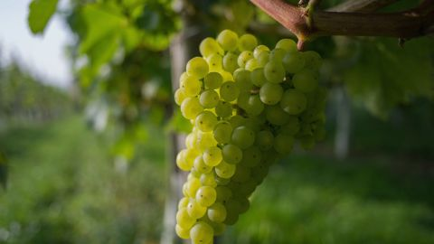 Grapes moved down this year from No. 6 to No. 8, according to the report.