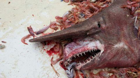 A shrimp fisherman caught a rare goblin shark off Key West.