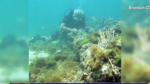 nr Marquez wreck Columbus Santa Maria ship _00004626.jpg