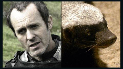 """<strong>Stannis Baratheon / Honey Badger:</strong> The show is filled with foul, charismatic and clever characters, but Stannis is singular in his drab, relentless thirst for power. The dour, wanna-be king has the """"personality of a lobster,"""" but few can match his pugnaciousness. He's even willing to  battle his brother and embrace religious fundamentalism to get the iron throne. Like Honey Badger, that squat, unstoppable predator made famous by a viral video, Stannis """"don't give a s***."""""""