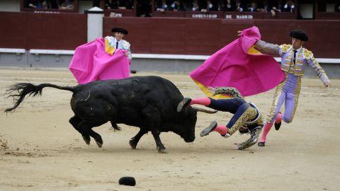 Matador David Mora is knocked down by a bull at Las Ventas bullring in Madrid on Tuesday, May 20.