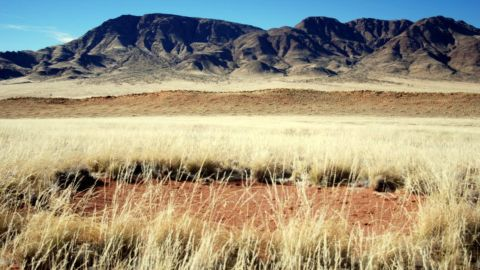 """Known as """"fairy circles,"""" these dots have posed a mystery to scientists, who have yet to prove what causes them to pop up on the landscape."""