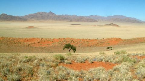Juergens based his findings on the fact that p. allocerus were the only insect species found consistently across the full stretch of desert where the circles are present, and were especially abundant around the circles.