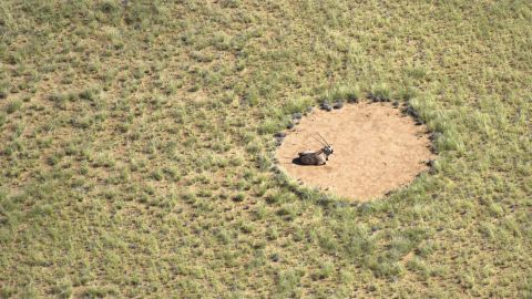 Though these types of occurrences are rare, they are likely to occur in arid regions with nutrient-poor soil.