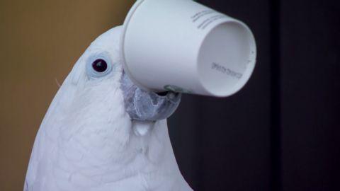 pkg parrot loves coffee_00001605.jpg