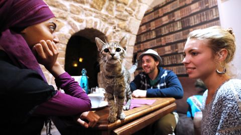 A cat stands on a table among consumers at the 'Cafe des chats' (Cat Cafe) in Paris on September 16, 2013. This is the first 'cat cafe' in Paris, where customers can enjoy a drink while playing with one of the cats at the premises. The idea is inspired by a Japanese concept