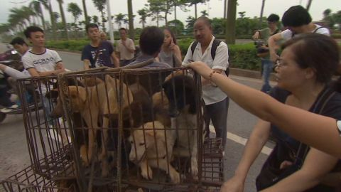 cnn dnt coren China dog meat festival_00004612.jpg