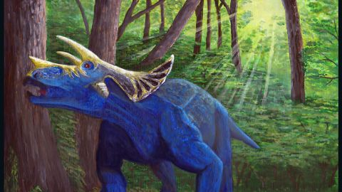 This image represents the latest evolution of the triceratops in the Hell Creek Formation of eastern Montana.