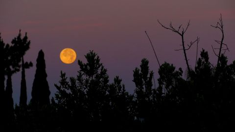 During the early morning hours of July 12, Marie Sager ventured outside her Los Angeles, California, backyard to spot the supermoon before it faded away.