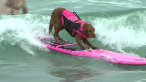 mxp dog surfing contest KGTV _00004926.jpg