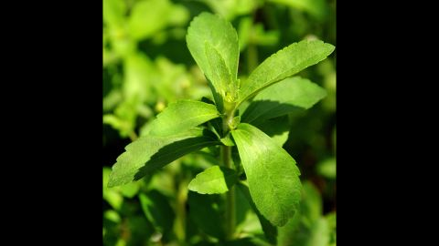 """The leaves from stevia plants are used for medicinal purposes and as a sugar-free sweetener. It is reported to be much sweeter than white sugar, but isn't approved by the <a href=""""http://www.fda.gov/aboutfda/transparency/basics/ucm214864.htm"""" target=""""_blank"""" target=""""_blank"""">FDA</a>. Nausea is a possible <a href=""""http://www.mayoclinic.org/healthy-living/nutrition-and-healthy-eating/expert-answers/stevia/faq-20057856"""" target=""""_blank"""" target=""""_blank"""">side effect</a>. Calories per tablespoon: 0."""