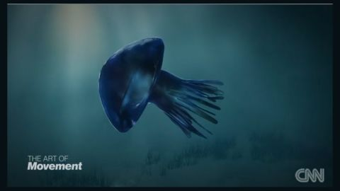 """The polyp then grows into a new medusa and continues its journey through the seas. Kubota said, """"Butterflies fly in the air. Jellyfish fly in the ocean. When jellyfish rejuvenate, it is like (when a) butterfly becomes back to worm."""""""