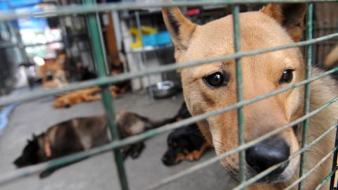 A rescued dog waits to be adopted in Hong Kong.