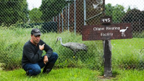 Native only to North America, just 22 whooping cranes existed on the planet in 1922, the facility's Dr. John French told Mike. Today there are more than 500.