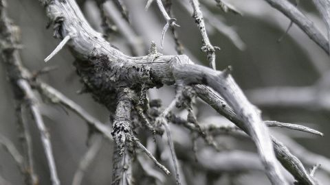 """Climate change has not been kind to the world's<strong> </strong>forests. Invasive species such as the bark beetle, which thrive in warmer temperatures, have attacked trees across the North American west, from Mexico to the Yukon. <a href=""""http://www.colorado.edu/news/releases/2012/03/14/discovery-pine-beetles-breeding-twice-year-helps-explain-increasing-damage#sthash.PCdFWhdi.dpuf"""" target=""""_blank"""" target=""""_blank"""">University of Colorado researchers have found</a> that some populations of mountain pine beetles now produce two generations per year, dramatically boosting the bugs' threat to lodgepole and ponderosa pines. In this 2009 photo, dead spruces of the Yukon's Alsek River valley attest to the devastation wrought by the beetles."""