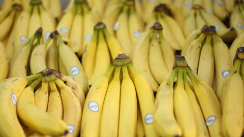 """The supermarket variety of the banana fruit, the Cavendish, is currently threatened by a disease know as """"Tropical Race 4."""""""