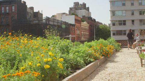 Rooftop gardening chris boyette ts orig_00003001.jpg