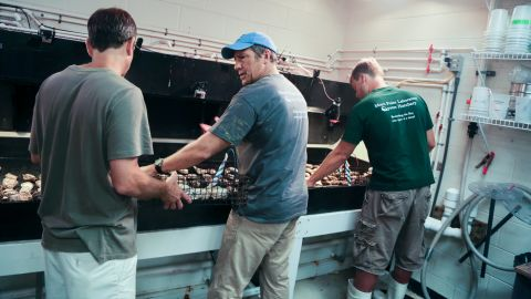 """Employees teach Mike Rowe about the """"oyster orgy."""""""
