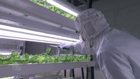 spc one square meter japan hydroponic vegetable farms_00015703.jpg