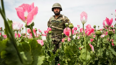 KANDAHAR, AFGHANISTAN - APRIL 5: A soldier in the Afghan National Army's 6th Kandak (battalion), 3rd company walks through a poppy field during a joint patrol with the U.S. Army's 1st Battalion, 36th Infantry Regiment near Command Outpost Pa'in Kalay on April 5, 2013 in Kandahar Province, Maiwand District, Afghanistan. The United States military and its allies are in the midst of training and transitioning power to the Afghan National Security Forces in order to withdraw from the country by 2014. (Photo by Andrew Burton/Getty Images
