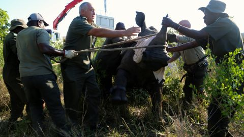 """Kruger's park rangers began relocating rhinos last year to <a href=""""http://www.bbc.co.uk/news/world-africa-28758910"""" target=""""_blank"""" target=""""_blank"""">clear """"poaching hotspots"""" near the porous Mozambique border</a>."""