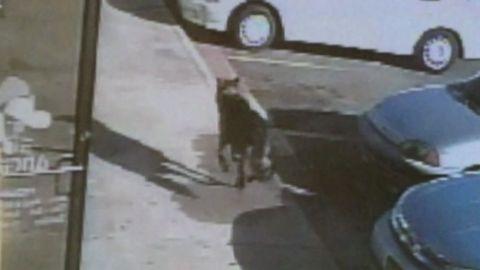 pkg ga dog shot takes bullet for family_00005819.jpg