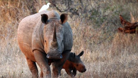 Kruger spans an area of approximately two million hectares and borders two other countries -- making the protection of its inhabitants an ongoing battle.