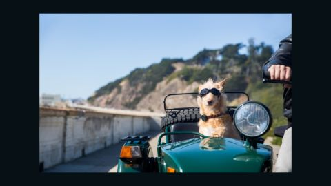 GPS trackers - such as this model from Whistle - should ensure greater security for pets and peace of mind for their owners.