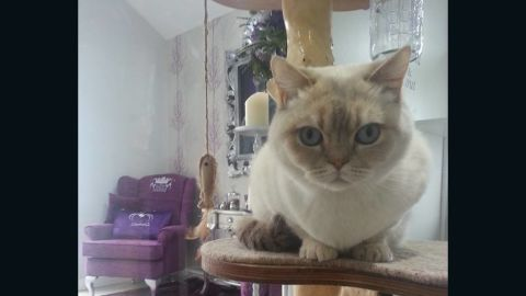 The Ings Luxury Cat Hotel in Yorkshire, UK, offers a similar level of pampering.