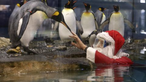 Santa interacts with king penguins at Marineland, an animal exhibition park in Antibes, France.