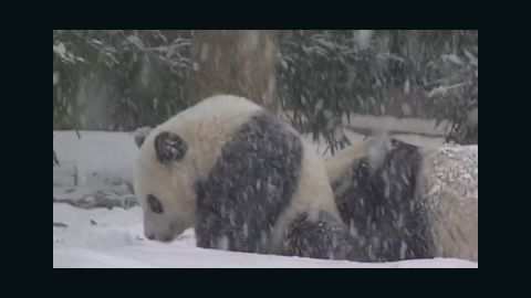 sot bao bao first snow national zoo_00005120.jpg