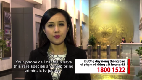 CNN readers funded an anti-pangolin-poaching PSA, now airing in Vietnam.