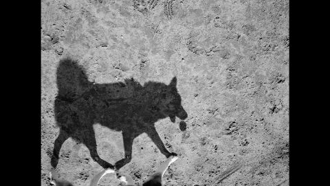 """Thomas Roma spent three years taking photos at a dog park in Brooklyn, New York. """"Their shadows, I felt, revealed a wilder side of their nature,"""" the 64-year-old photographer said."""