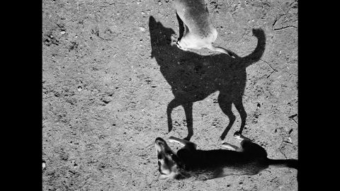 """""""There was something about the primal nature of the shadows of these little lovable pets of ours. ... They immediately struck me as something like cave drawings,"""" Roma said.<br />"""