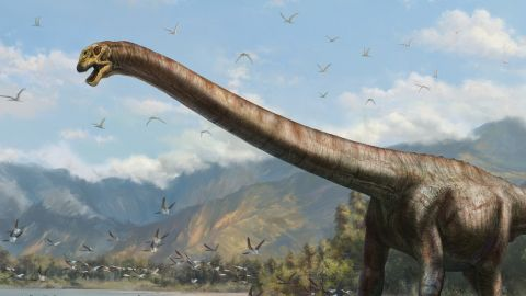 This illustration shows what the newly discovered long-necked dinosaur may have looked like.