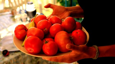 Part of the traditional Ikarian diet: fresh tomatoes from the garden.