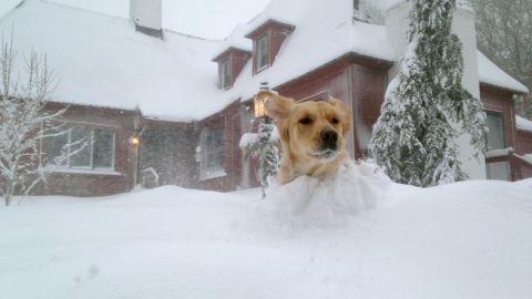 A dog romps through heavy snow in Bourne, Massachusetts, on February 15.