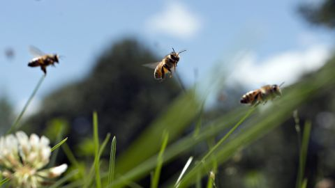 """<strong>Register:</strong> If you already have a green thumb and plants available for pollination, you can register your space to be included on the Pollinator Partnership's database. The <a href=""""http://pollinator2.massiveimpacttechnology.com/ShareMap.aspx"""" target=""""_blank"""" target=""""_blank"""">S.H.A.R.E. map</a> collects pollinator habitats from all over the world in an effort to build the community."""