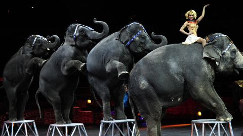 Ringling Bros. and Barnum & Bailey circus elephants perform during Barnum's FUNundrum in New York on March 26, 2010.
