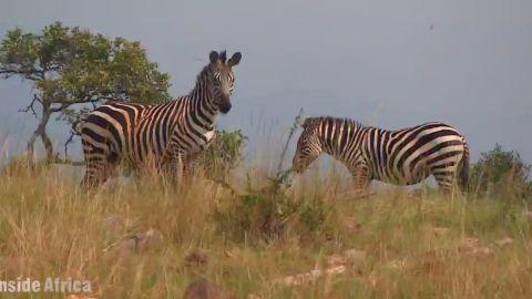 spc inside africa rwanda akagera national park a_00003025.jpg