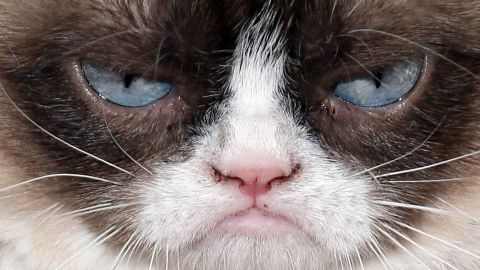 """<a href=""""http://www.grumpycats.com/"""" target=""""_blank"""" target=""""_blank"""">Grumpy Cat</a>, also known as Tardar Sauce, is perhaps the most well-known cat on the Internet. Celebrities as diverse as Anderson Cooper and Jennifer Lopez have taken pictures with her."""
