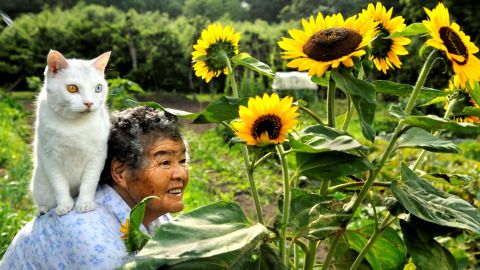 """<a href=""""https://www.facebook.com/MisaoFukumaru"""" target=""""_blank"""" target=""""_blank"""">Misao, 88, and her odd-eyed cat Fukumaru</a> in Japan. Misao found the stray cat when he was little. Misao's granddaughter, photographer Miyoko Ihara, documented the friendship between the <a href=""""http://www.dailymail.co.uk/news/article-2232894/Misa-Fukumaru-Friendship-pensioner-cat.html"""" target=""""_blank"""" target=""""_blank"""">Misao and Fukumaru</a>."""