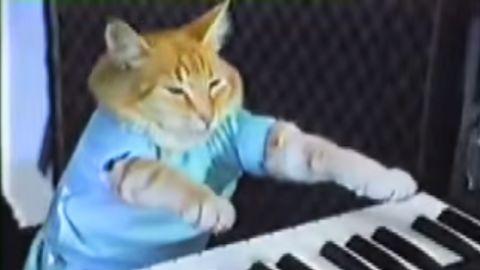 "<a href=""https://www.youtube.com/watch?v=J---aiyznGQ"" target=""_blank"" target=""_blank"">Keyboard cat</a> is an Internet meme."