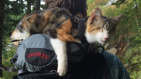 """<a href=""""https://www.facebook.com/blindcathoneybee"""" target=""""_blank"""" target=""""_blank"""">Honey Bee</a> is a blind cat from <a href=""""http://www.animalsfiji.org/"""" target=""""_blank"""" target=""""_blank"""">Animals Fiji</a>, an animal veterinary service. Here, Honey Bee rested on the backpack of Jonathan Ursin, husband of Sabrina Ursin, who took the photograph."""