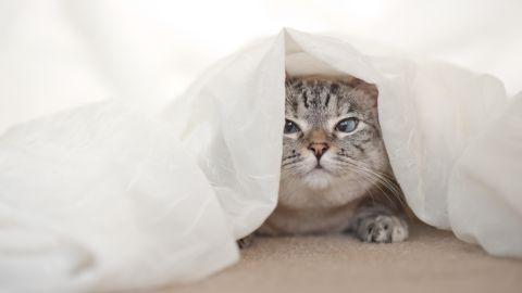 "<a href=""http://nalacat.com"" target=""_blank"" target=""_blank"">Nala Cat</a>, a female Siamese-tabby mix, is a star on <a href=""https://instagram.com/nala_cat/"" target=""_blank"" target=""_blank"">Instagram</a> with more than a million followers.   <br />"