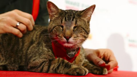 """<a href=""""https://www.facebook.com/BlindOskar"""" target=""""_blank"""" target=""""_blank"""">Oskar the Blind Cat</a>, along with other famous Internet cats, starred in a holiday music video """"<a href=""""https://www.youtube.com/watch?v=06GhXB2_XNE"""" target=""""_blank"""" target=""""_blank"""">Hard to Be a Cat at Christmas</a>"""" in 2013. <br />"""