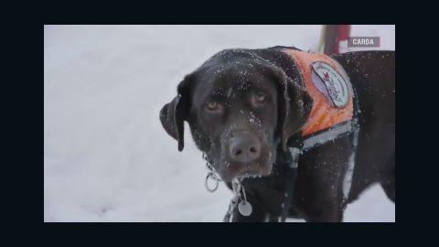 Avalanche Dogs Stephanie Elam Orig_00020704.jpg