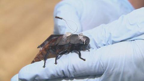 cyborg cockroaches find disaster survivors orig_00002303.jpg