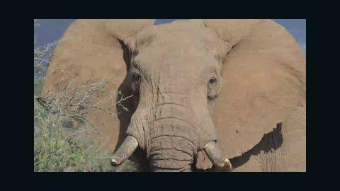 pkg church elephant extinction_00034207.jpg