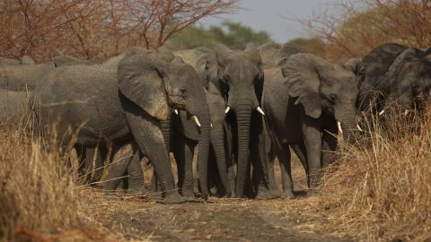 Ninety-six elephants are killed every day in Africa, according to one estimate. Rangers at Zakouma National Park are determined to reverse that trend.